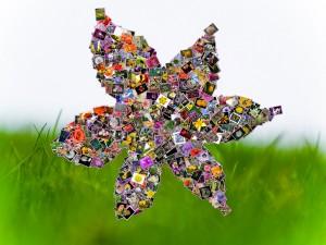 collage-flower